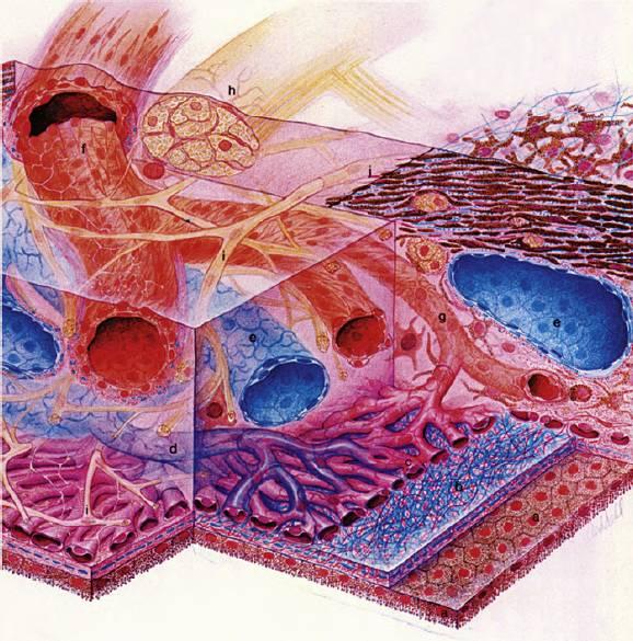 Мембрана стекловидная